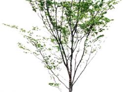 户外道路树木贴图2